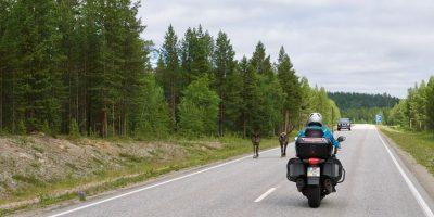 Transporto apsauga nuo gyvunu